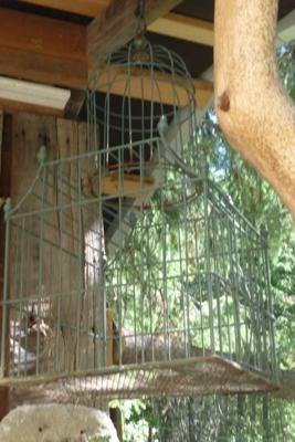 Bird Cage to keep the bird theme going