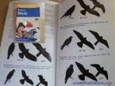 Bird Strikes are preventable