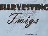 Harvesting Twigs for Crafts