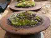 Metal Moss Garden