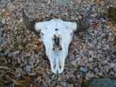 Skull Crafts - find them wildcrafting