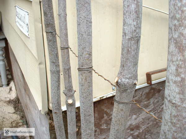 How To Build A Twig Fence Use Those Branches And Twigs