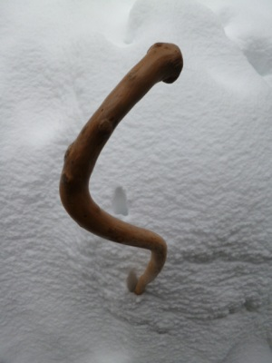 My favorite Twig Walking Stick, made from the root of Amelanchier