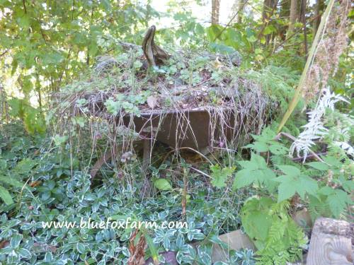 Partly hidden by the shrubbery, this old wheelbarrow is mysterious and poignant