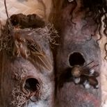 Wildcrafted birds nests
