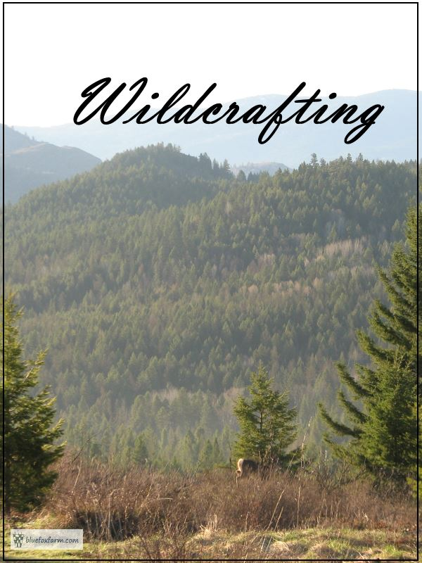Wildcrafting