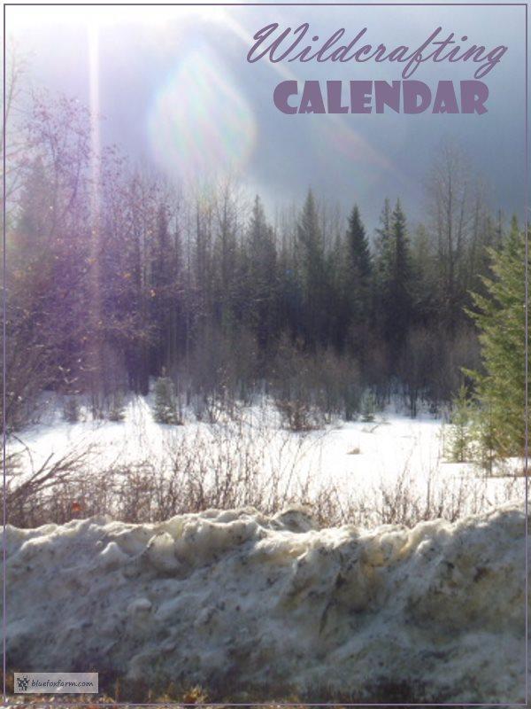 Wildcrafting Calendar