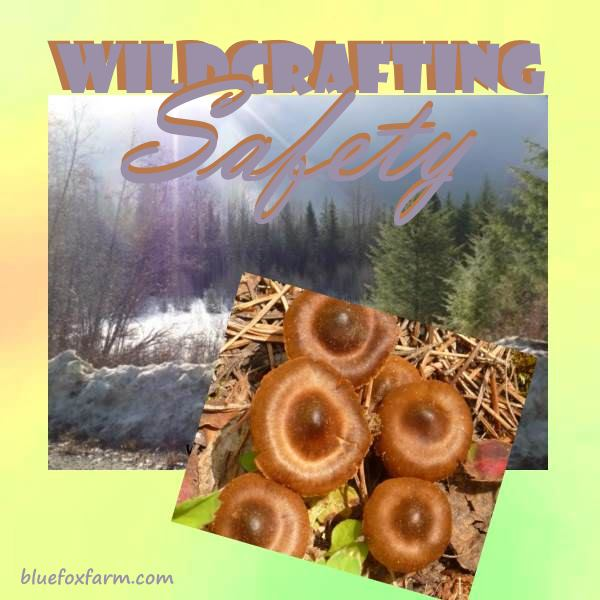 Wildcrafting Safety - tips and hints