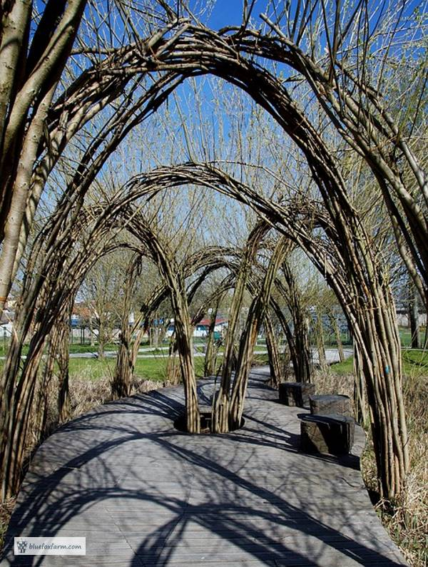 Willow Tunnels
