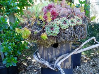 If roofs are your thing, put a green roof on the birdhouse...