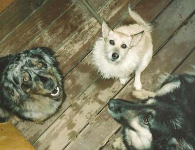 My Pack of Precious Dog