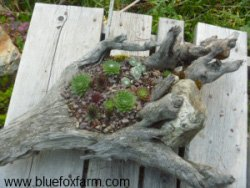 Root Driftwood Planter