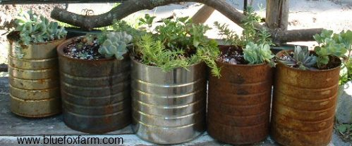 Tin Can Planters...