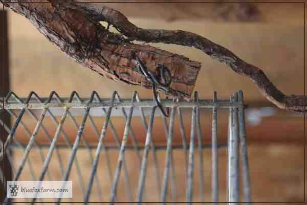 A root or wiggly twig makes a perfect handle for the bird cage