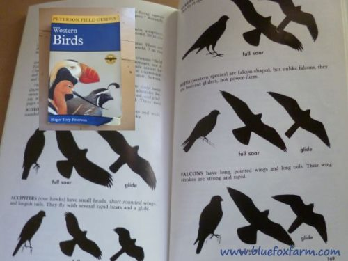 Western Birds - silhouettes of birds of prey