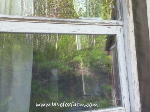 The reflection of more garden