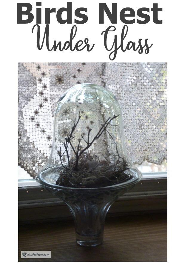 Birds Nest Under Glass