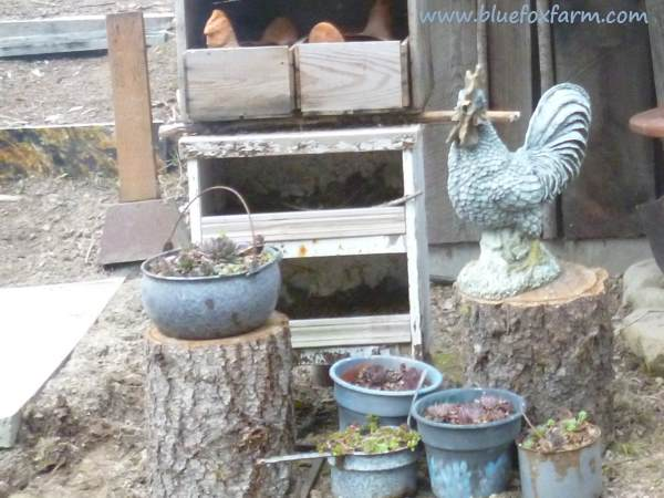 The salvaged rooster takes pride of place and protects his two terracotta hens in the nesting boxes