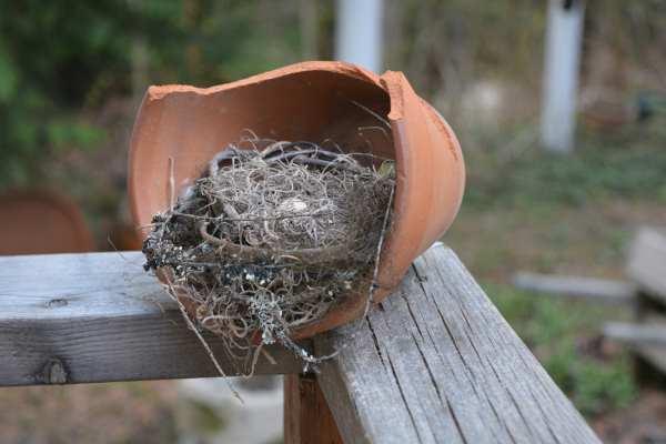 Faux Birds Nest in a Terracotta Pot