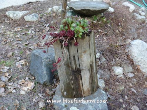Rugged, found items make perfect planters for hardy succulents...