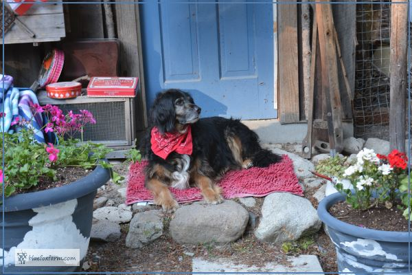 Bracken, proud of his red bandana
