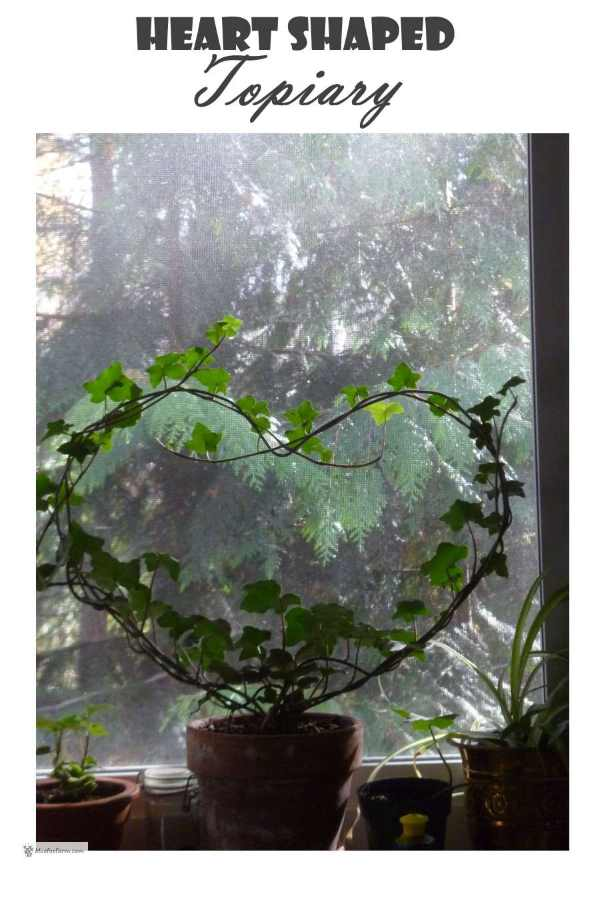 Heart Shaped Topiary with ivy