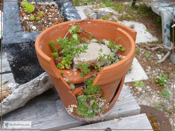 Later; this is what the clay pot looks like with plants in...