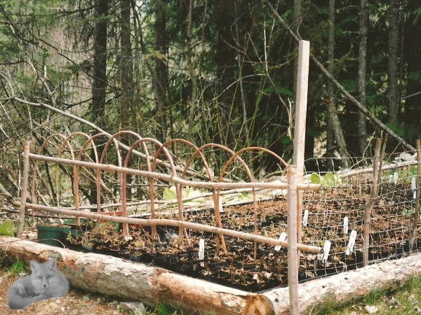 How to build a bent twig fence