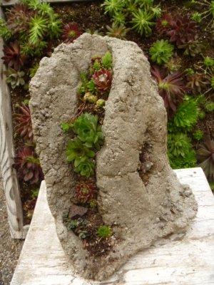 ...with smaller Sedum species, as well as the tiny Sempervivum arachnoideum, thrive...