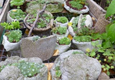 Hypertufa Pots, Crags, Fissures, Baskets and Strata Planters