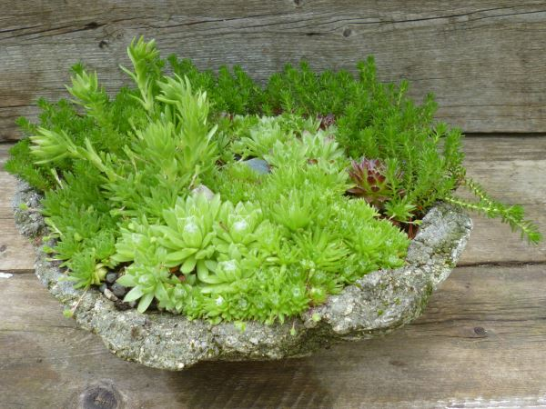 A simple hypertufa sag pot is spectacularly rugged...