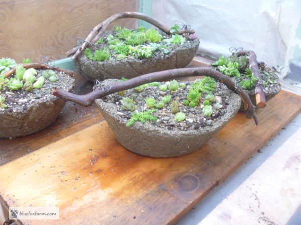 The finished Twig Handled Hypertufa Baskets