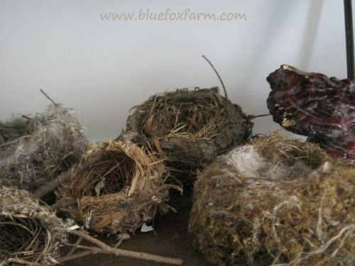 Collection of treasures - birds nests