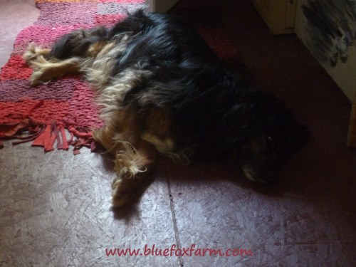 Someone has found that the rug is quite nice to sleep on...