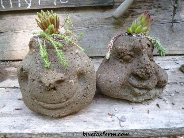 Hypertufa face planted with Sedum and Sempervivum