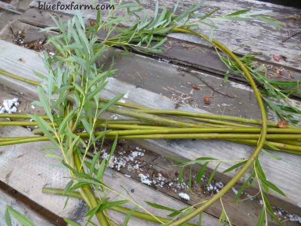 Step one - make a circle with one of the longest stems