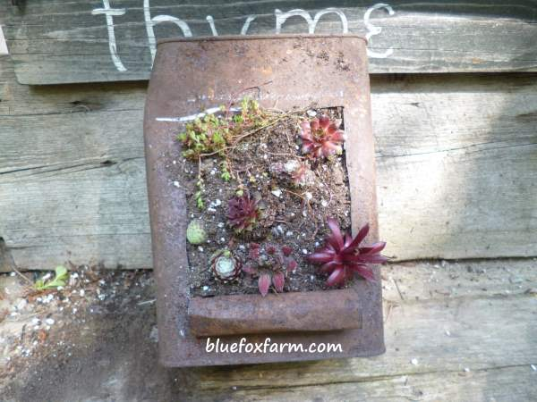 And planted with succulents!