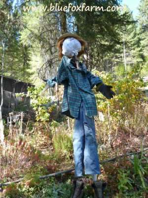 The finished Rustic Scarecro