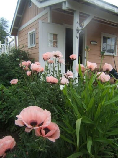 Sensible Gardenings lovely pink shed...