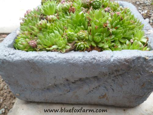 Styrofoam coolers made into planters
