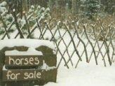 Twig Lattice Fence