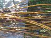 Twigs for Crafts