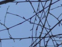 Fine and delicate twigs