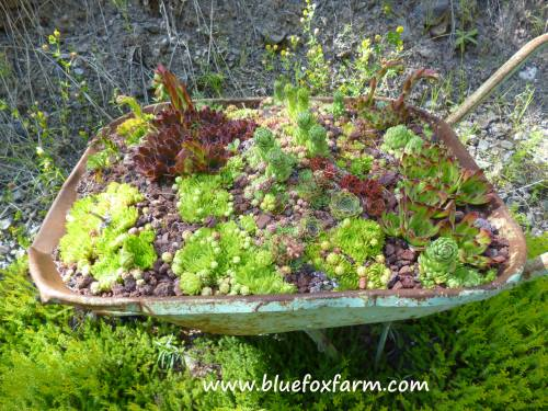 A home for special hardy succulents